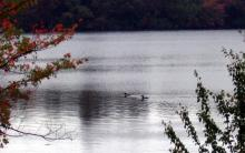 Loons on Lake Ninevah - Photo: J. Booth 2004